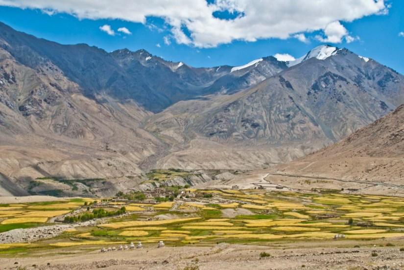 Meadows of Nubra Valley