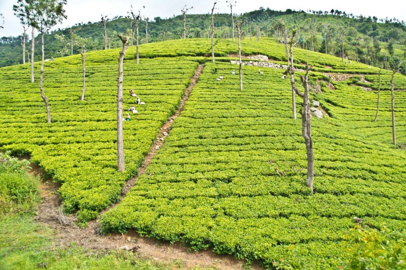 Munnar Most Beautiful Places in India
