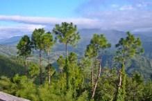 Nagarkot Nepal trees
