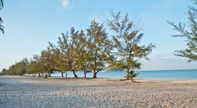 Trees at Otres beach Sihanoukville Cambodia