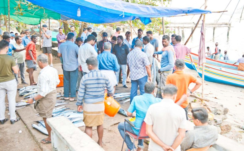 Fish Market in Fort Kochi