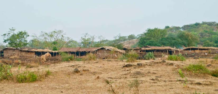Huts of Maldharis people in Gir forest