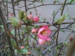 Blooming in Chelsea 002