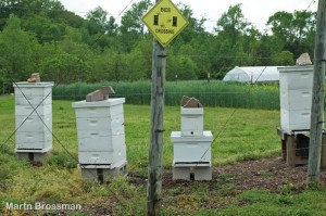 Beehives at the CCCC Sustainable Agriculture test farm and gardens, Pittsboro campus.