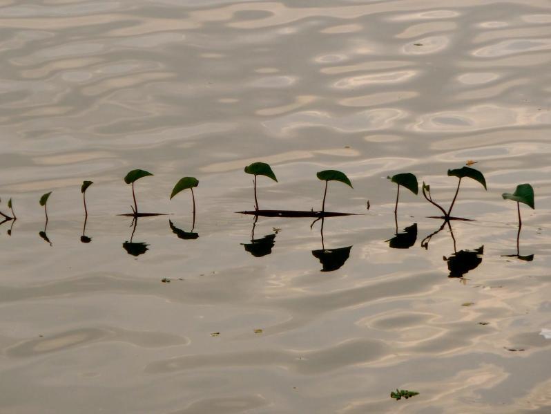 ulsoor lake leaves