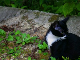 a black and white kitten sitting and looking over its left shoulder