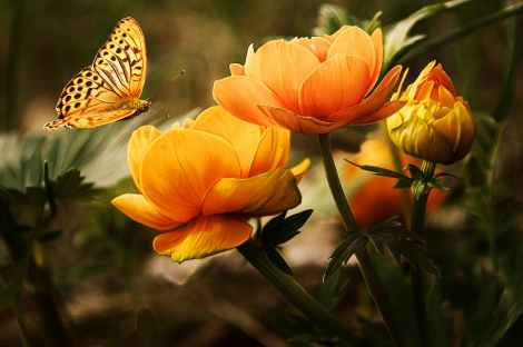 a spiritual awakening is like metamorphosis of a butterfly