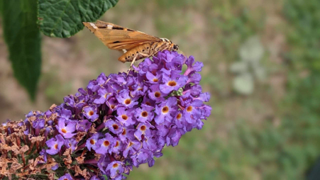 Butterfly as a spirit animal, meaning of seeing a butterfly, spirit animals