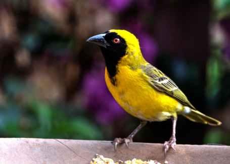 bird perching on outdoors, spirit animal as a yellow bird