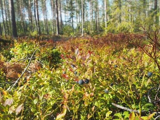 shrubs, bushes, food forest, forest baths