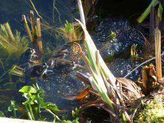 Charlotte Wiles Frogs and Spawn 4