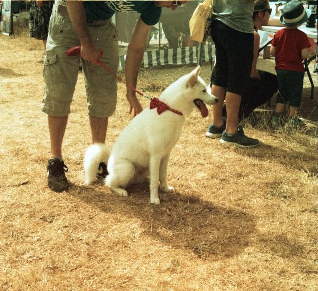 yashica 44 TLR 127 format rollei crossbird cross processing slide film summer fete fair fayre people dog