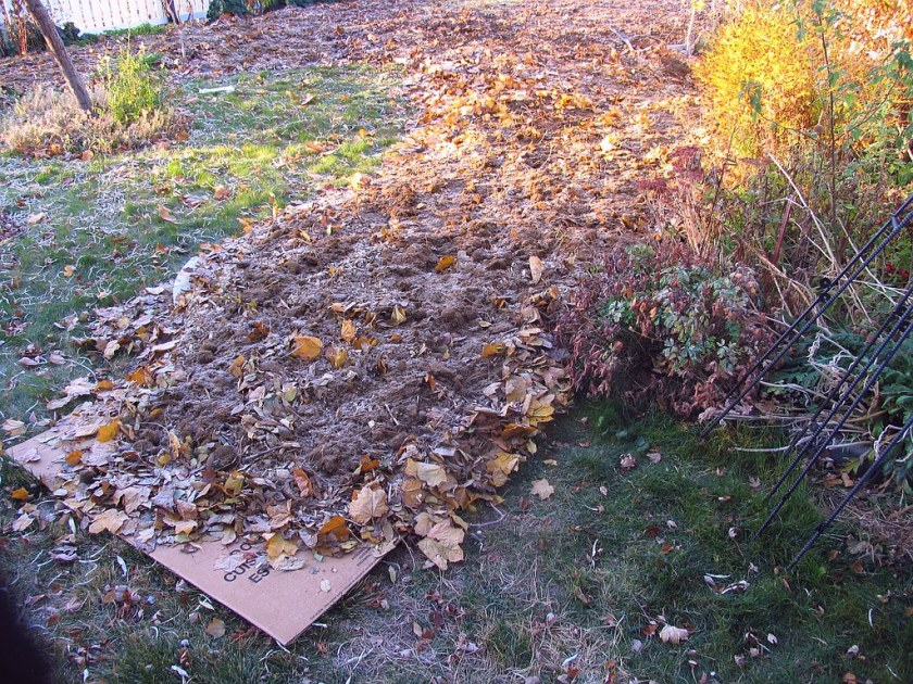 Kill Grass By Sheet Composting