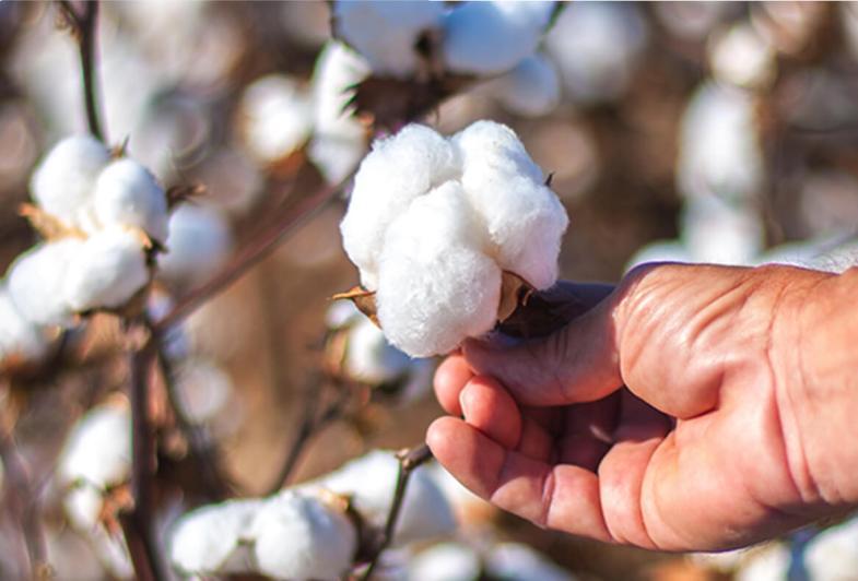 The Varieties of Cotton