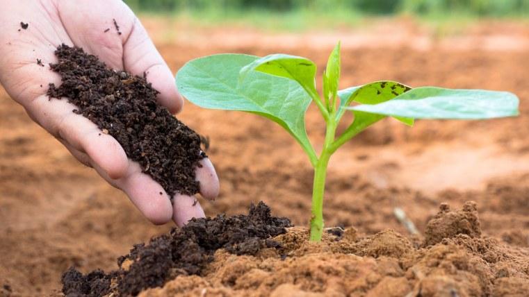 Why Plants Need Nitrogen?