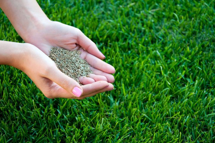 Select the Grass Seed Products