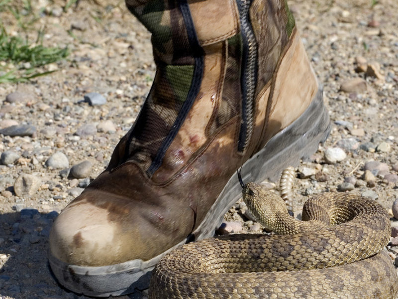 How to Reduce the Risks of Snake Holes In Yard