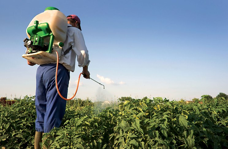 Preventing Thrips