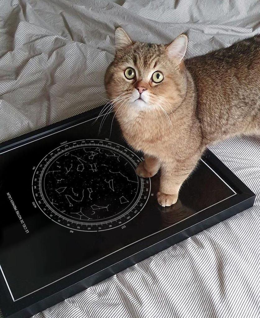 sky map cat
