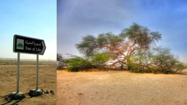 Το μυστηριώδες «δέντρο της ζωής» στο Μπαχρέιν - Ένα δέντρο 400 ετών στη μέση της αραβικής ερήμου! 8