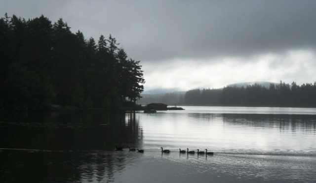 Silver Lake With Canada Geese