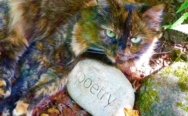 My cat Pookie curled around the Poetry stone. She will go in my art journal.