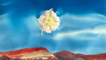 Cheryl's original painting of a datura plant in the New Mexico desert