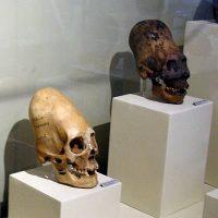 パラカスの頭蓋骨:DNA検査で歴史が変わるか