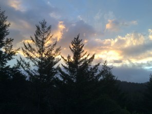 Firs at sunset