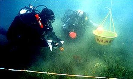 Los buzos de la expedición se sumergieron a 30 metros en busca de las ruinas. Presuntamente habría más edificios enterrados bajo el lecho del lago Titicaca.