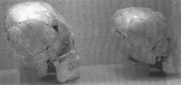 Cráneos alargados en exhibición en el Museo de Alabama, Moundville, 1987. Foto: Greg Little.