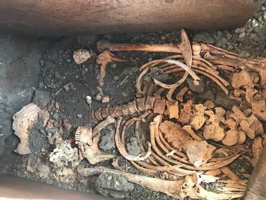 Esqueleto de un adulto.