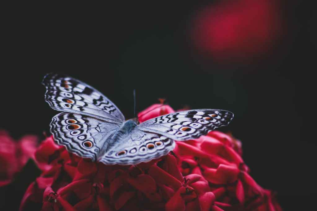 silver and black butterfly on red artificial flower