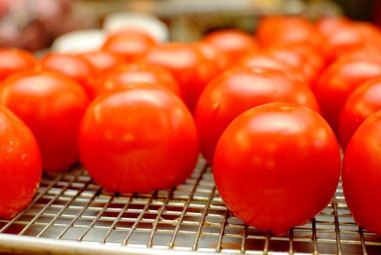 mystic-oasis-tomatoes-1