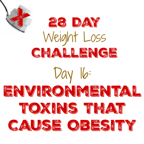 Day 16: Environmental Toxins That Cause Obesity