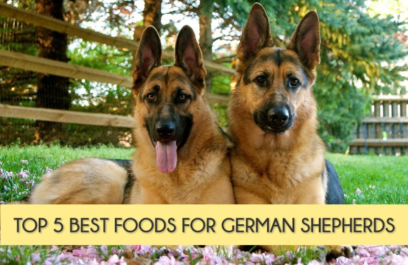 Best Dog Food For Puppies Reviews Uk
