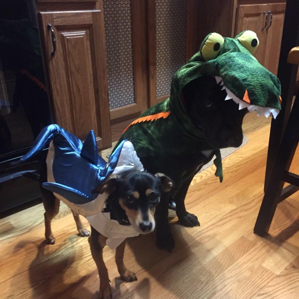 Halloween Dog Costumes Michelle Maskaly