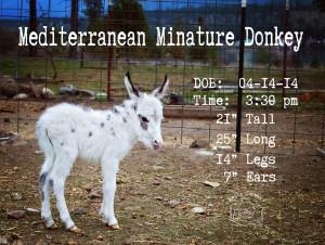 Baby Donkey stats FB WM