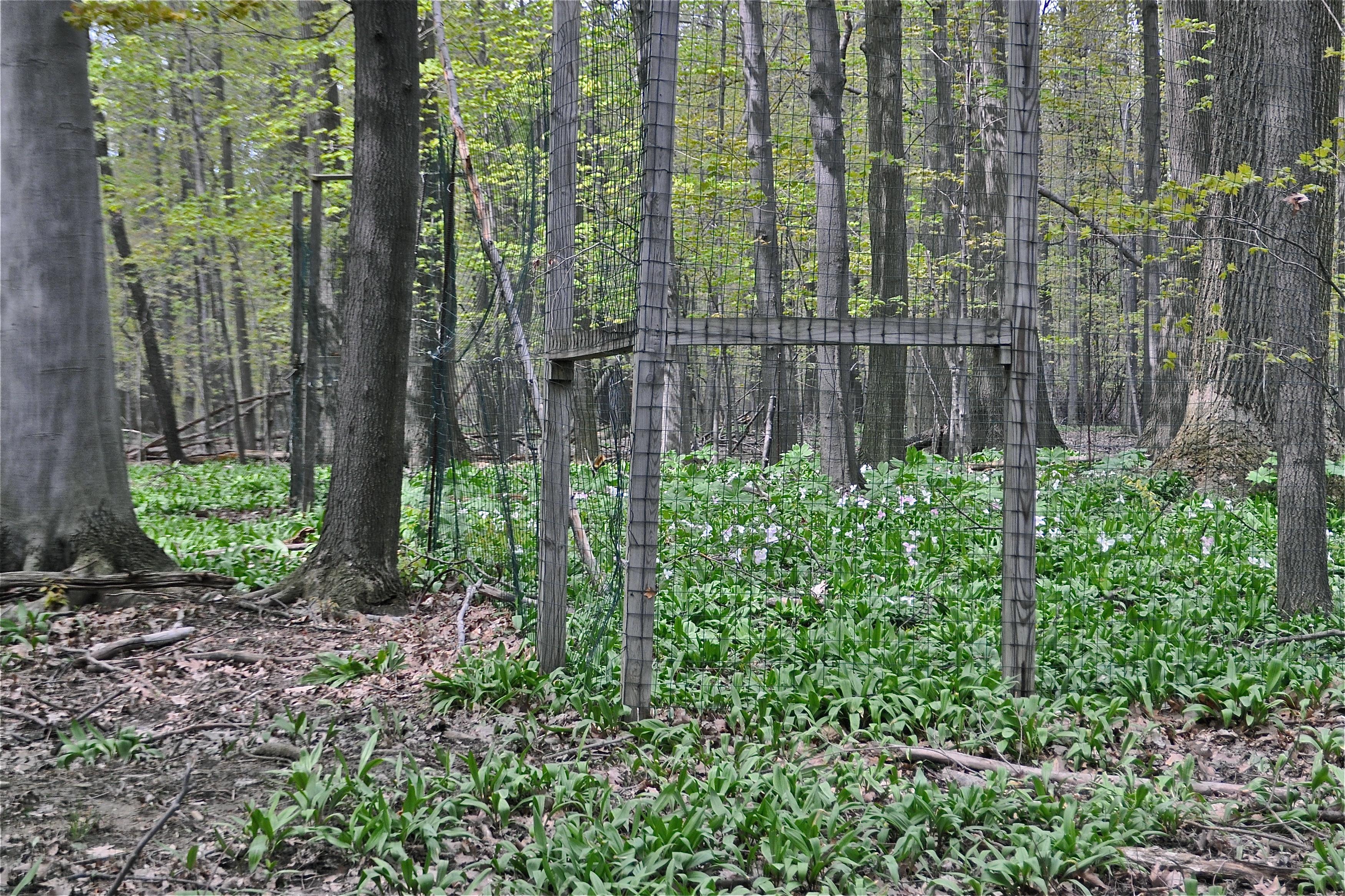 Deer Destroy Natural Habitat