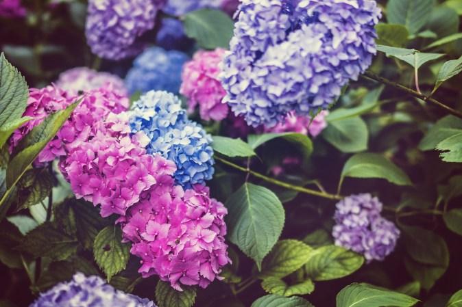 beautiful-1845599_1920