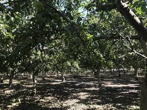 California Walnut Harvest Tour with California Walnut Commision
