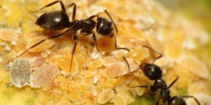 How Long Ants Live and Other Strange Facts about Ants