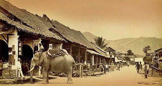Elephant on Chiang Mai Thae Pae Rd. 1904