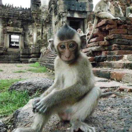 Monkeys at Lopburi Thailand