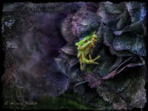 green tree frog in hydrangea blossom, artistic treatment