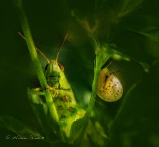 Snail and grasshopper share a stem