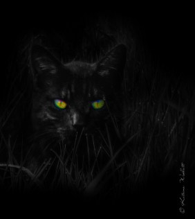 black cat in the darkness