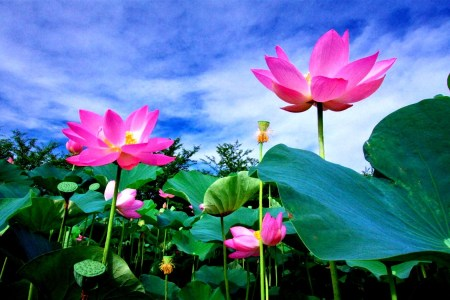 Flower images 2018 what does the lotus flower symbolize flower what does the lotus flower symbolize the flowers are very beautiful here we provide a collections of various pictures of beautiful flowers charming mightylinksfo
