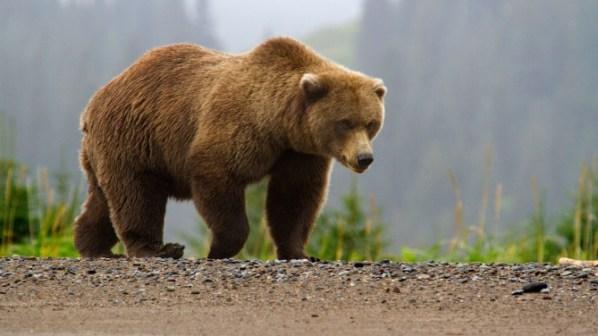 Datand ursul omului