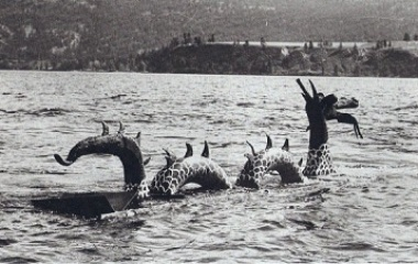 Image result for ogopogo